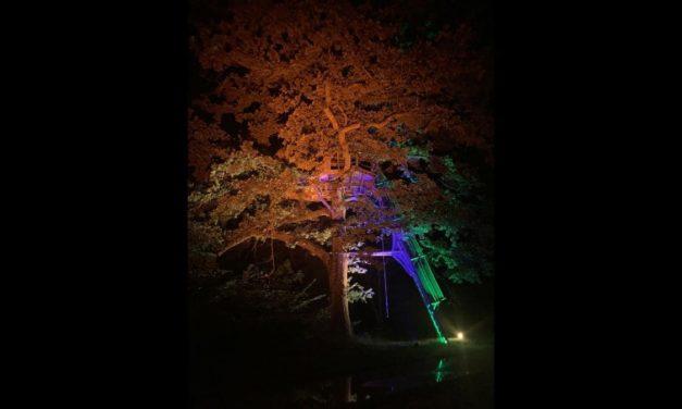 Starway illumine la nature